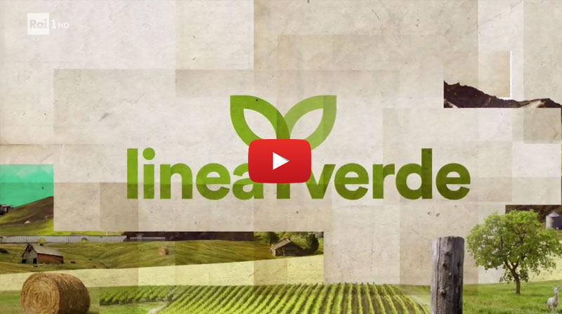 preview_video_LINEA_VERDE